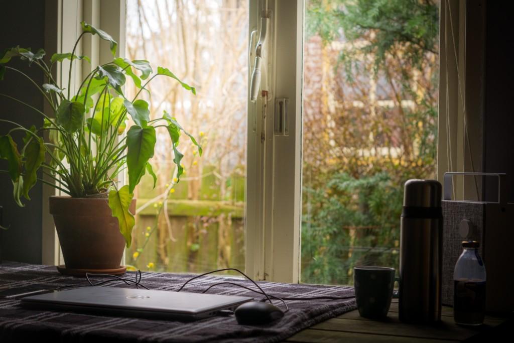 Biuro domowe - blat przy biurku zlaptopem irośliną.